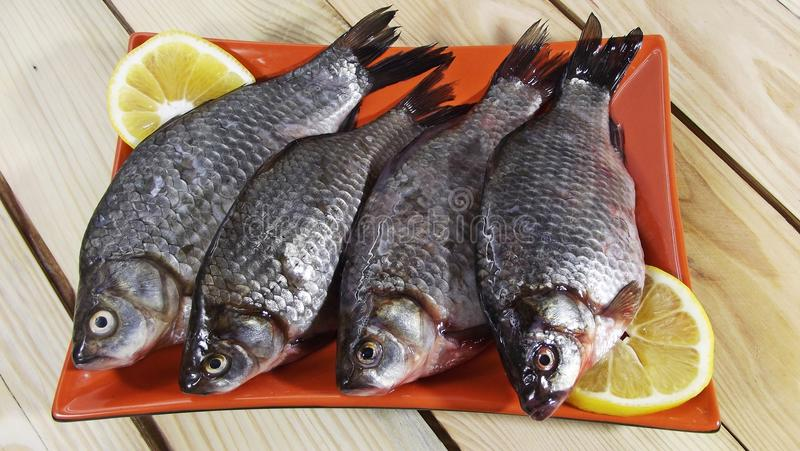 Vissenkarper royalty-vrije stock afbeelding