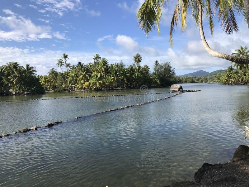 Vissenval in Huahine royalty-vrije stock foto