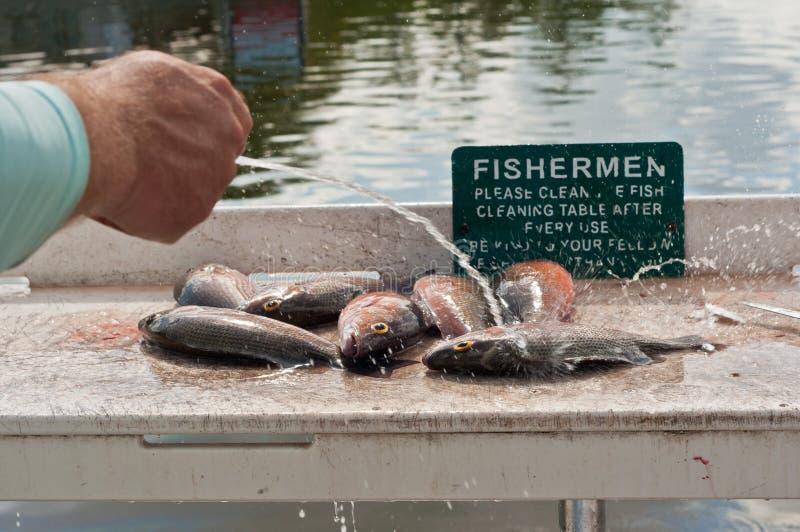 Visser het schoonmaken vissen bij een schoonmakende post stock foto