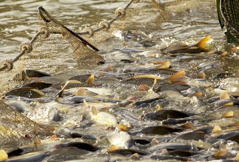Visserij op het meer stock fotografie