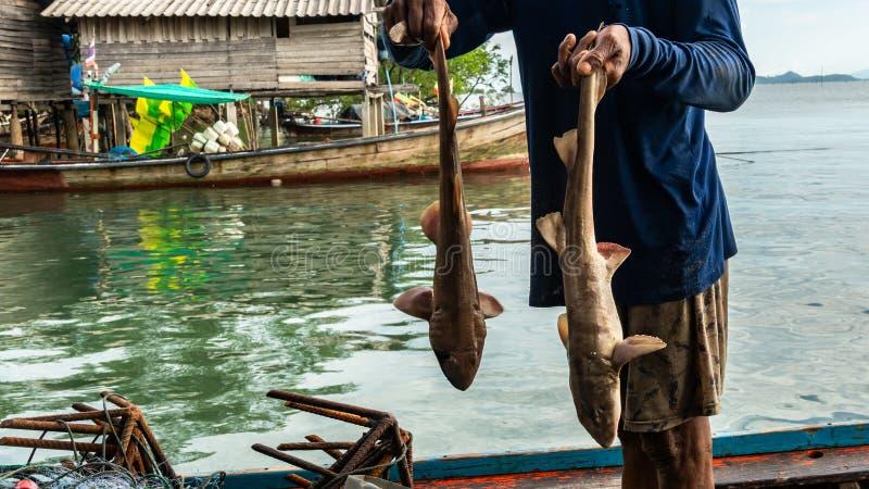Vissers die haai van het overzees vangen stock foto