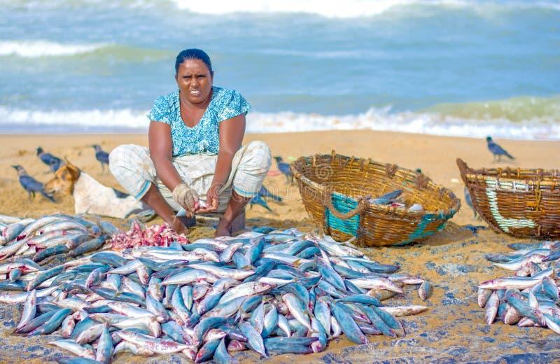 Vissers en visserij in Sri Lanka royalty-vrije stock afbeeldingen