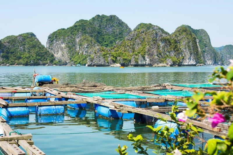 Vissersdorp en fishpond dichtbij het eiland van Kattenbedelaars, Vietnam royalty-vrije stock fotografie
