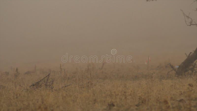 Visset löst gräs i höst skjutit Gult höstgräslandskap mycket av melankoliskt royaltyfri fotografi