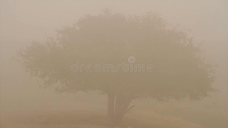 Visset löst gräs i höst skjutit Gult höstgräslandskap mycket av melankoliskt fotografering för bildbyråer