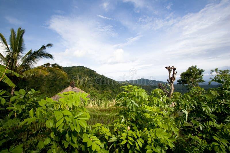 Vista à montanha e aos campos verdes foto de stock royalty free