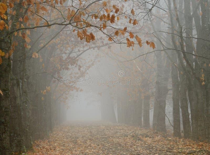 Vista φθινοπώρου στοκ εικόνες
