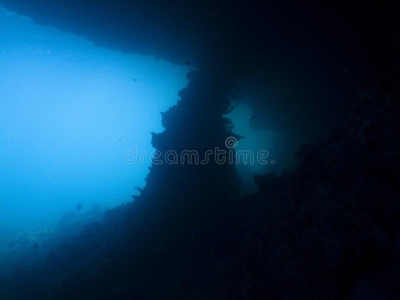Download Vista stock photo. Image of garden, fish, diving, scuba - 23003052