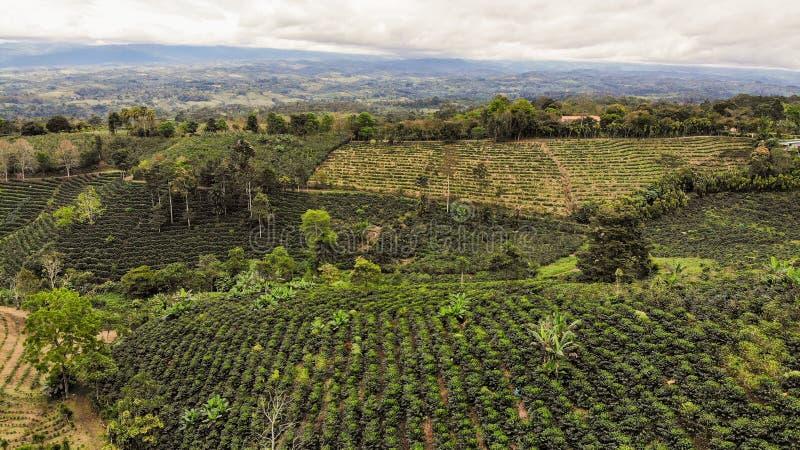 Vista aérea da cafeicultura imagens de stock royalty free