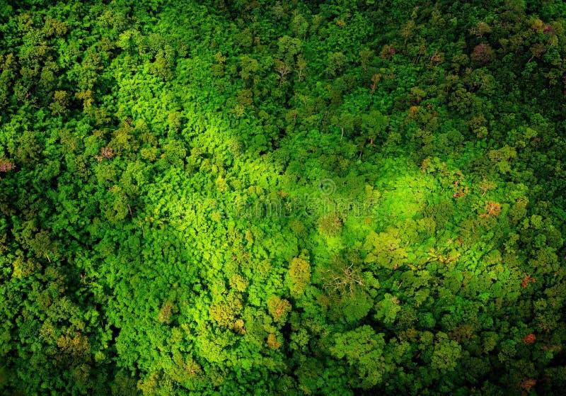 Vista aérea da floresta fotografia de stock royalty free