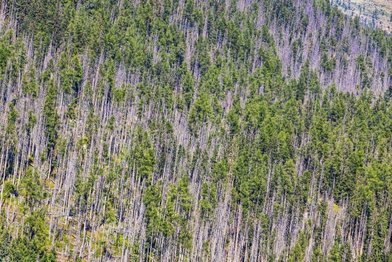 Vista aérea da floresta conífera em montanhas altas de Tatras imagens de stock royalty free