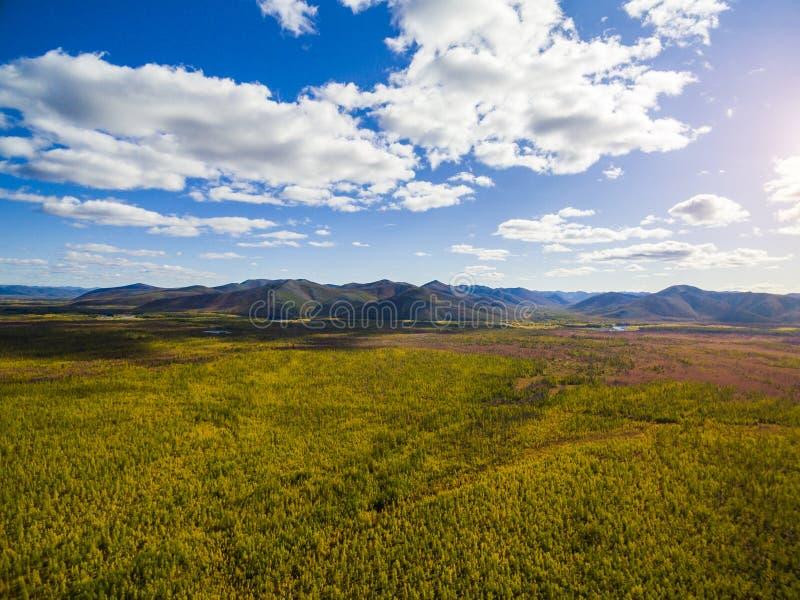 Vista aérea da floresta no Extremo Oriente, Rússia foto de stock royalty free