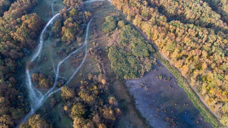 Vista aérea da floresta no outono fotos de stock