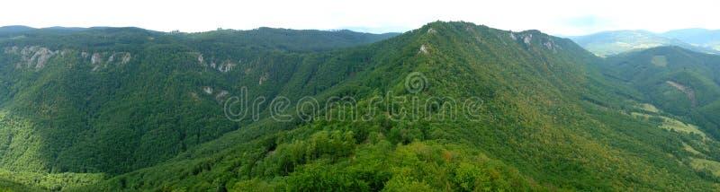 Vista aérea da floresta verde imagens de stock