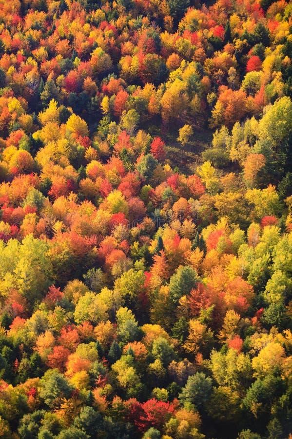 Vista aérea da folhagem de outono em Vermont foto de stock royalty free