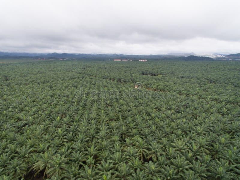 Vista aérea da plantação do óleo de palma situada no krai de kuala, kelantan, malaysia, Ásia Oriental fotografia de stock royalty free