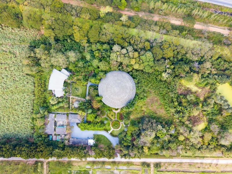 Vista aérea da selva em torno da abóbada do inseto da vida fotos de stock royalty free