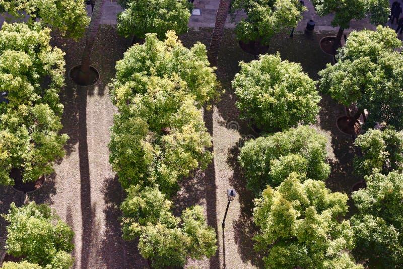 Vista aérea das árvores do parque, verde, o mais forrest imagem de stock