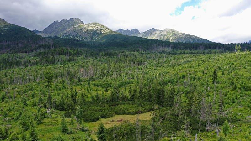 Vista aérea das florestas sob as altas montanhas de Tatras recuperando após a tempestade catastrófica fotos de stock