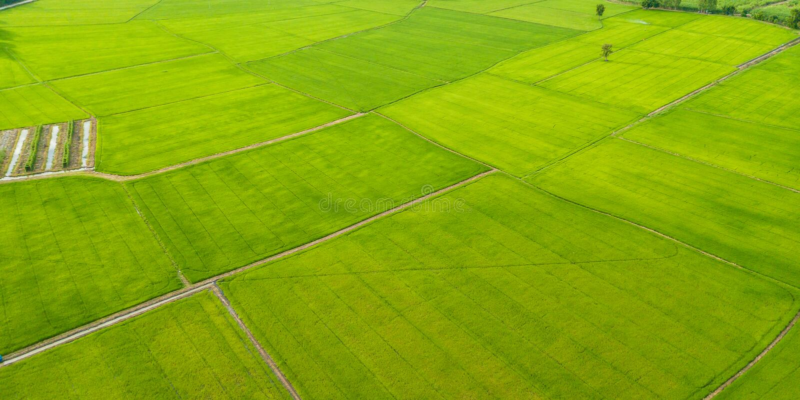 Vista aérea de campos con los diversos tipos de agricultura en rural foto de archivo libre de regalías