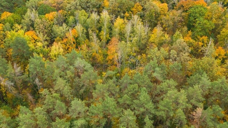 Vista aérea de cima para baixo da floresta do outono fotografia de stock