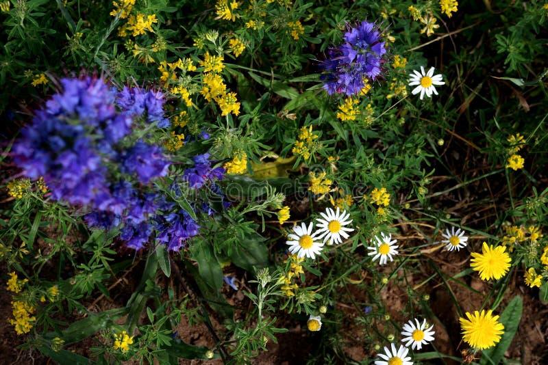 Vista aérea de flores crescentes selvagens em cores azuis, brancas e amarelas imagens de stock