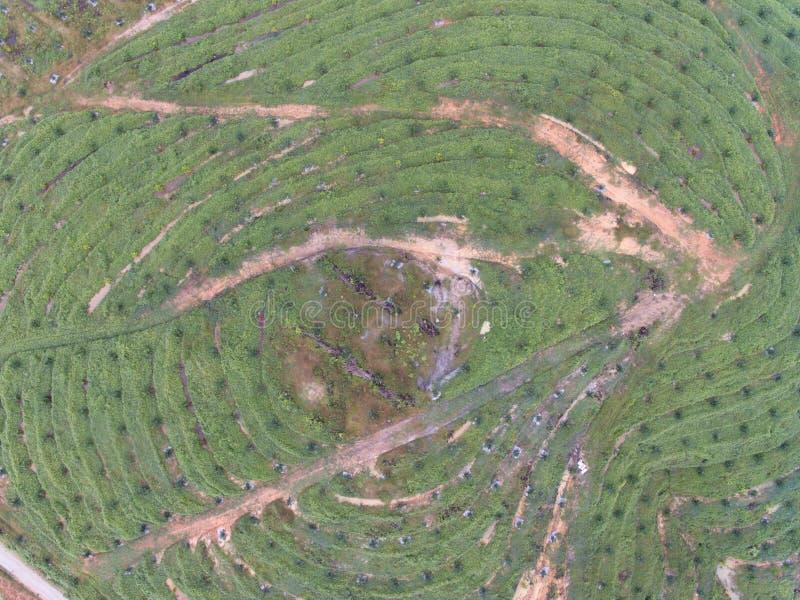 Vista aérea de la plantación del aceite de palma situada en el krai de Kuala, Kelantan, Malasia, el Este de Asia imagen de archivo