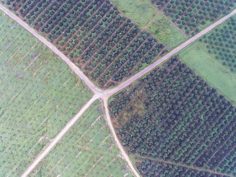 Vista aérea de la plantación del aceite de palma situada en el krai de Kuala, Kelantan, Malasia, el Este de Asia fotos de archivo libres de regalías