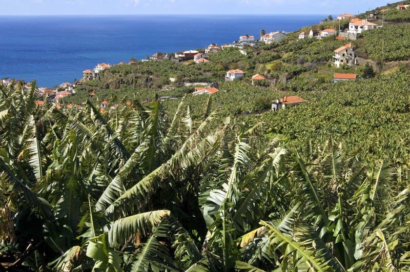 Vista aérea de los árboles frutales, del pueblo y de Océano Atlántico imágenes de archivo libres de regalías