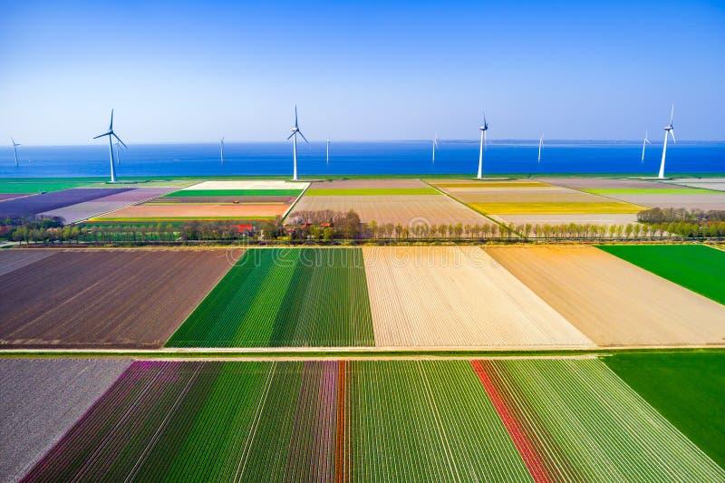 Vista aérea de los campos de los tulipanes en Países Bajos con los molinos de viento y el mar azul imagenes de archivo