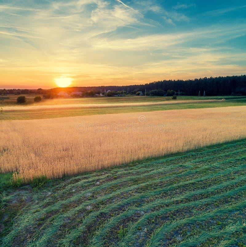 Vista aérea de los campos y del campo de trigo con la hierba segada foto de archivo libre de regalías