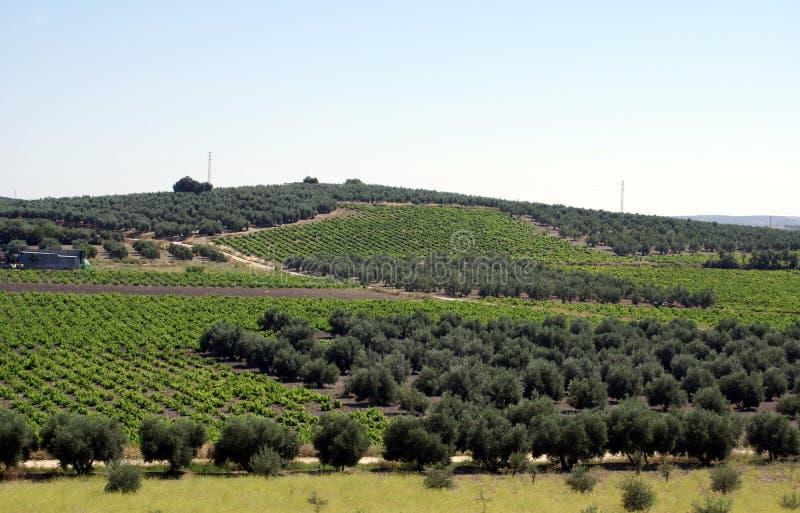 Vista aérea de terras mediterrâneas agrícolas na Espanha imagem de stock