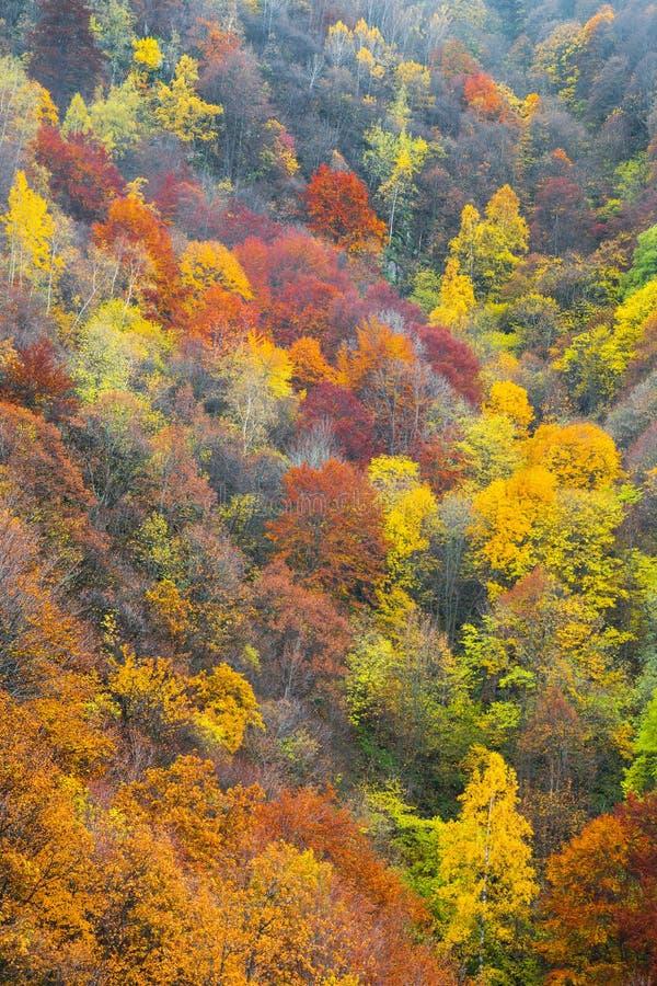 Vista aérea de uma floresta colorida no outono imagem de stock