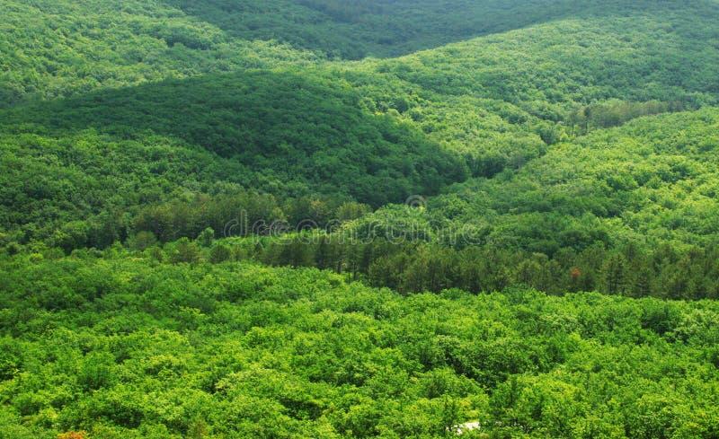 Vista aérea de uma floresta verde fotos de stock royalty free