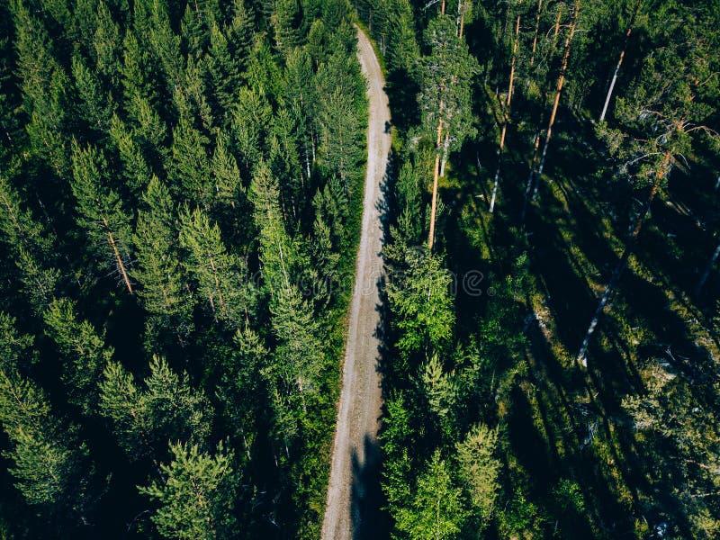 Vista aérea de un camino en bosque verde del verano en Finlandia foto de archivo