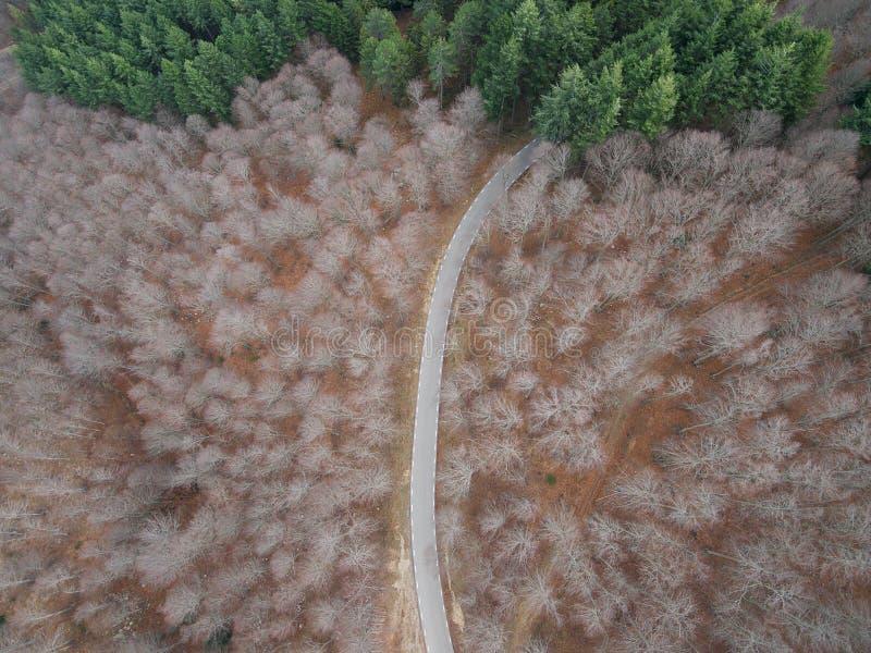 Vista aérea de un camino vacío en el bosque foto de archivo
