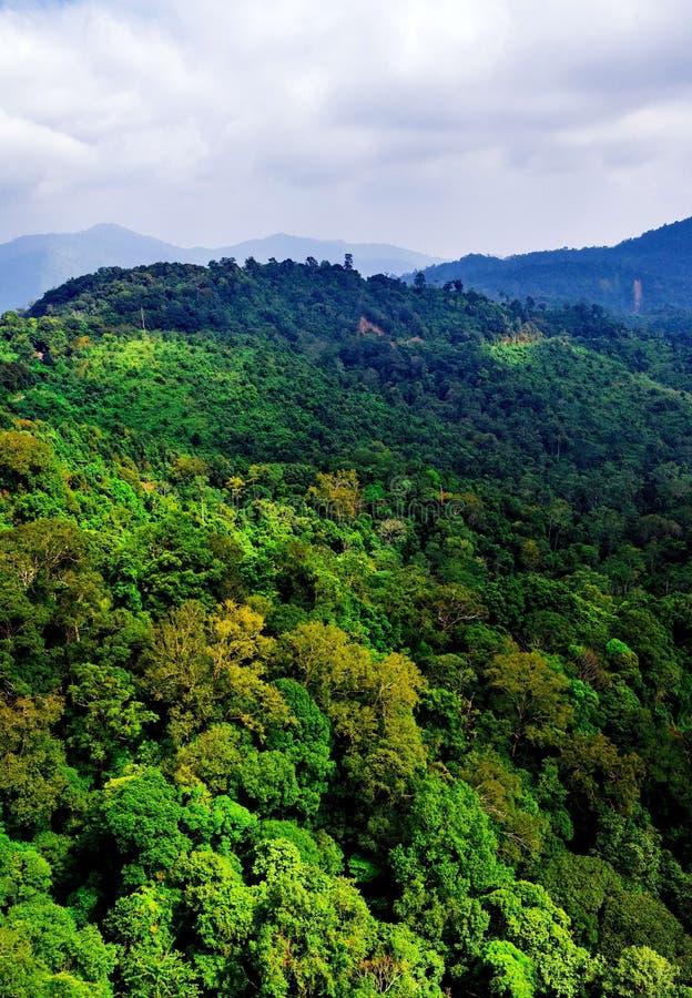 Vista aérea del bosque fotos de archivo libres de regalías