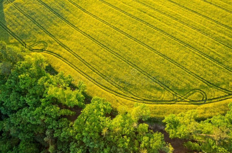 Vista aérea del bosque con el campo floreciente de la violación fotografía de archivo libre de regalías