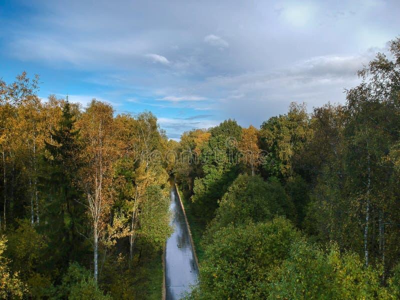 Vista aérea del bosque grueso en otoño imagen de archivo