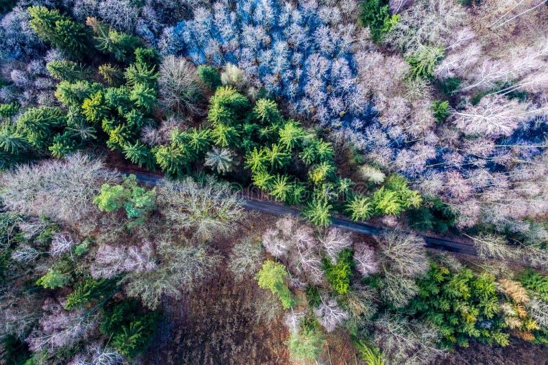 Vista aérea del bosque maravilloso con los árboles multicolores, Polonia fotos de archivo