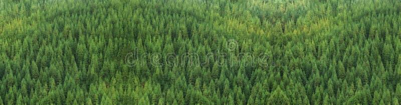 Vista aérea del bosque sano verde enorme del pino, textura del panorama imagen de archivo