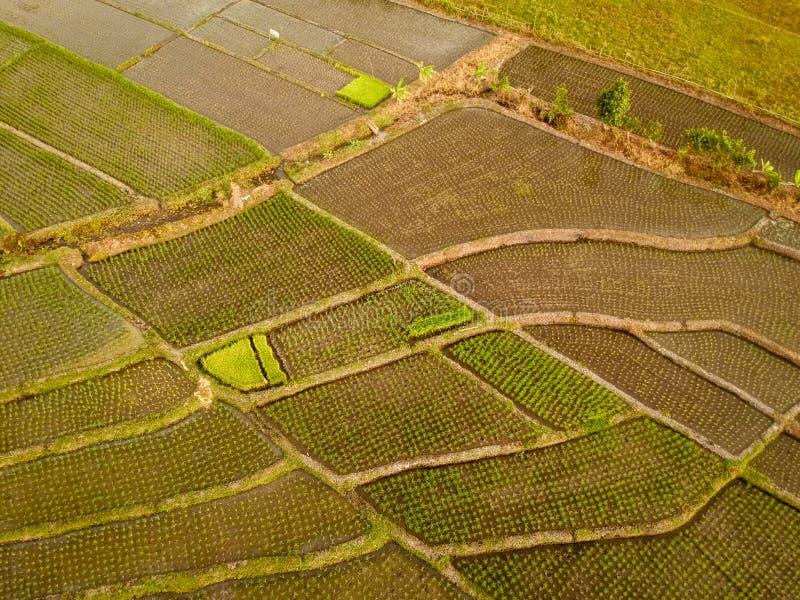 vista aérea del campo del arroz en la porción Bali del tanah imágenes de archivo libres de regalías