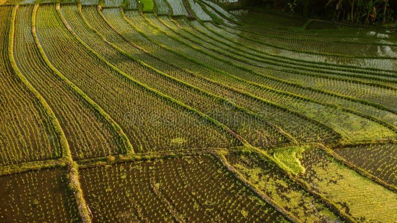vista aérea del campo del arroz en la porción Bali del tanah fotografía de archivo