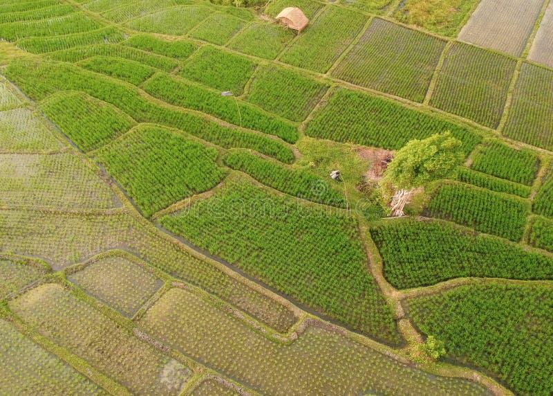vista aérea del campo del arroz en la porción Bali del tanah fotografía de archivo libre de regalías