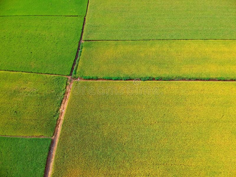 Vista aérea del campo de arroz imagen de archivo
