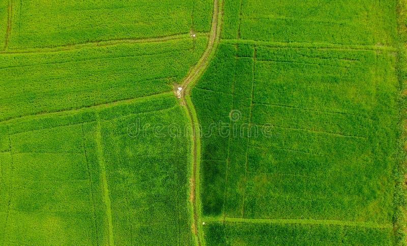 Vista aérea del campo de arroz fotos de archivo libres de regalías