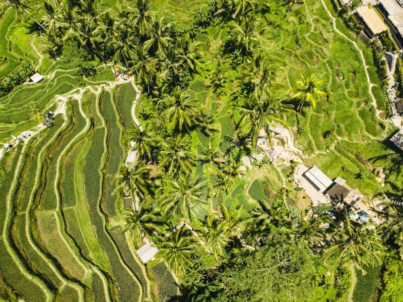 Vista aérea del campo de arroz de la terraza imagen de archivo