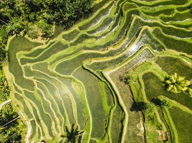 Vista aérea del campo de arroz de la terraza fotografía de archivo
