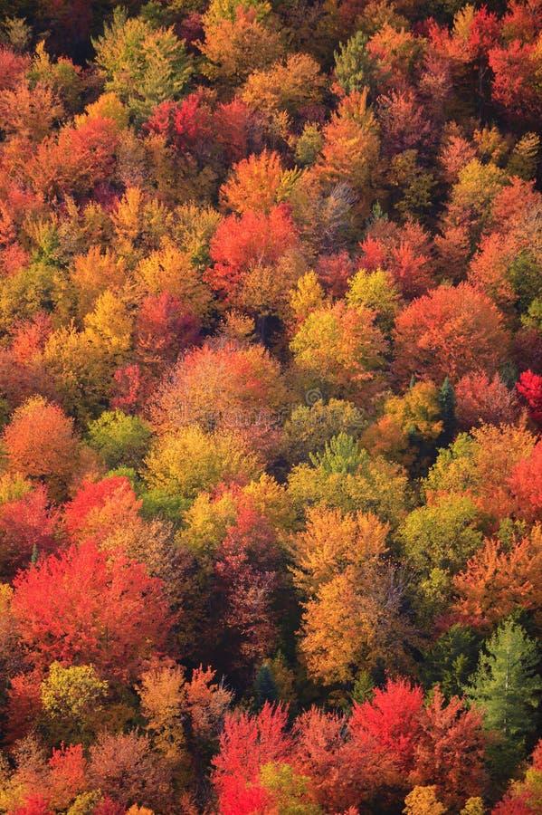 Vista aérea del follaje de otoño en Vermont fotografía de archivo libre de regalías