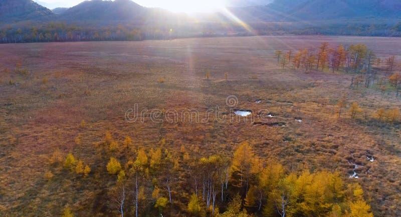 Vista aérea del follaje de otoño rojo en otoño Árboles en Japón en las colinas Tierra verde de la zona rural o del campo Paisaje  imágenes de archivo libres de regalías